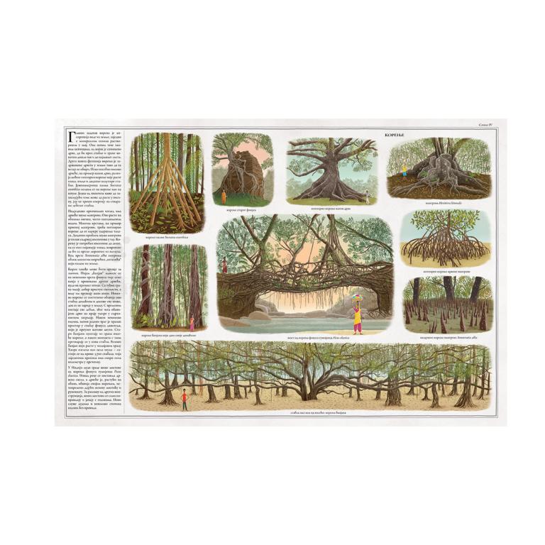 drvece-knjiga-za-decu